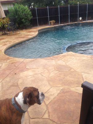 Pool & plaster for Sale in Dallas, TX