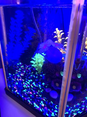 Glow in the dark fish tank for Sale in Puyallup, WA