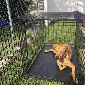 "Metal Dog Crate 48"" for Sale in Boca Raton, FL"