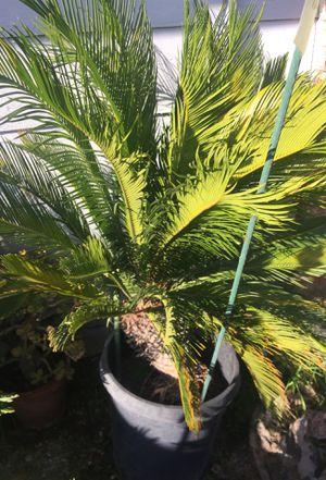 Plant for Sale in San Jose, CA