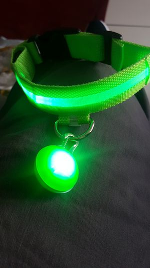 LED Dog Collar and light ball - Small/medium for Sale in Orlando, FL