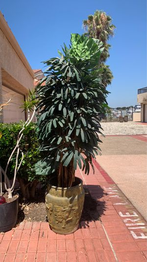 Plants for Sale in HUNTINGTN BCH, CA