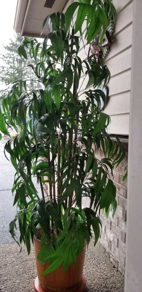 Silk bamboo