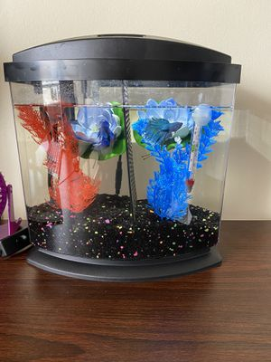 Brand new dual aquarium with 2 insane beautiful betas for Sale in Honolulu, HI