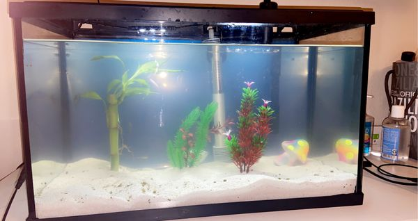 10 gallon Top Fin aquarium (filter and heater included)
