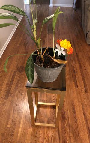 Plant Stand for Sale in Atlanta, GA
