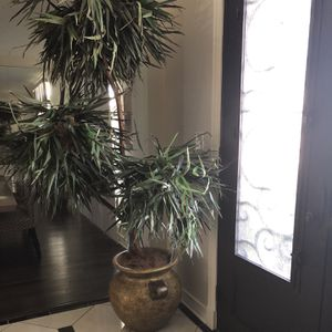 Decorative Indoor Plant with gold pot for Sale in Richardson, TX