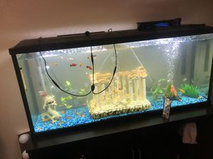 55 gallon fish tank for Sale in Portland, OR