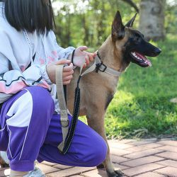 NEW!! Gray Bungee Leash and Collar Set for Sale in Norwalk,  CA