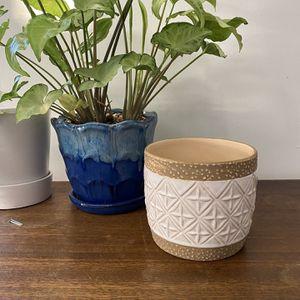 Succulent Plant Pot for Sale in Warwick, RI