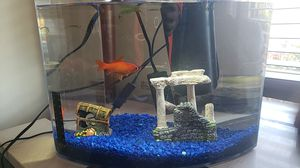 Fish tank with everything including heat, water pump, light, fish and decoration for Sale in Beaverton, OR