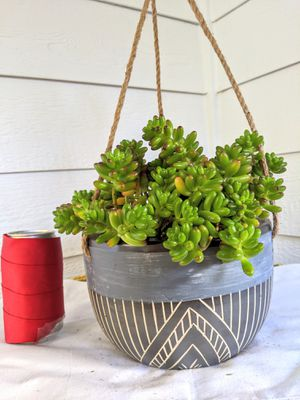 Jelly Bean Succulent Plants in Hanging Ceramic Planter Pot-Real Indoor House Plant for Sale in Auburn, WA