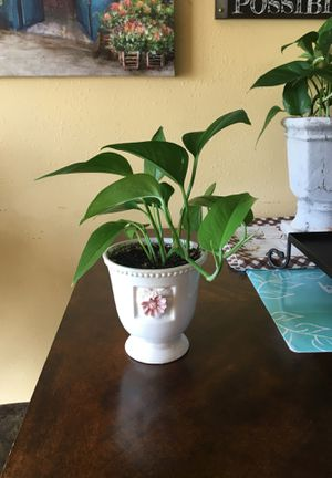 Beautiful Indoor 🌱 Plant. for Sale in Salt Lake City, UT