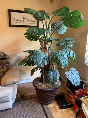 Professional Fake Plant for Sale in Phoenix, AZ