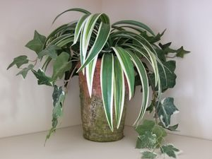 2 Silk Plant Arrangements with Pots for Sale in Murfreesboro, TN