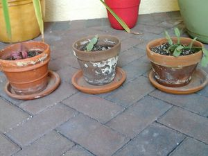 Potted plants for Sale in Wimauma, FL