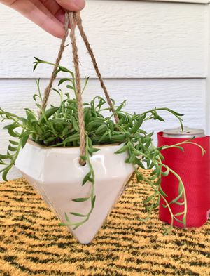 Real Indoor Houseplant - Banana String Succulent Plants in Diamond Hanging Ceramic Planter Pot for Sale in Auburn, WA