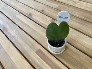 The Sill Hoya Heart Plant with Ceramic Pot and Dish for Sale in Bailey's Crossroads, VA