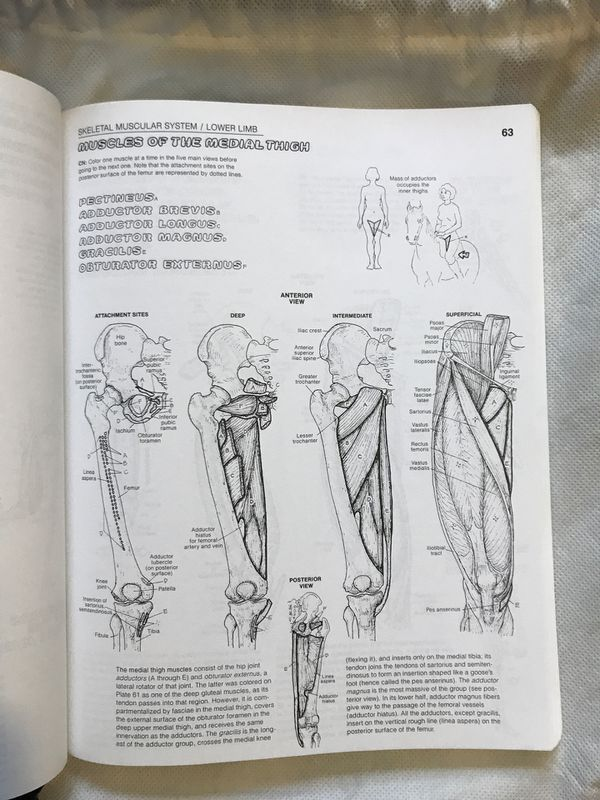 The Anatomy Coloring Book- Wynn Kapit/ Lawrence M. Elson