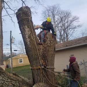 Tree cervise professional. Tel {contact info removed} for Sale in IL, US