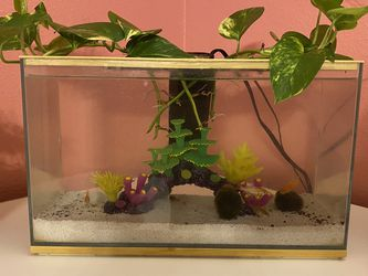 3 Gallon Aquarium With Filter And 5 Goldfish for Sale in Riverview,  FL