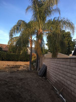 Palms for Sale in Ontario, CA