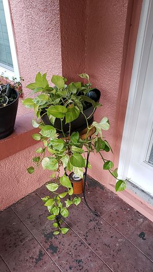Exotic Porch Plant for Sale in Tampa, FL
