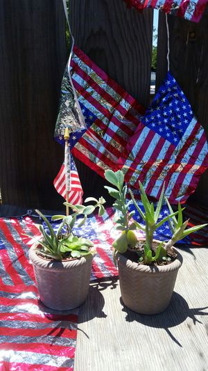 4th of July Succulent Plant Arrangement for Sale in Fresno, CA