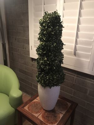 Tall Live Preserved Boxwood Topiary for Sale in Phoenix, AZ