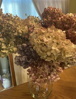 Glass Vase Full Of Real Dried Hydrangeas In Multi Colors Beautiful for Sale in Mount Laurel Township,  NJ