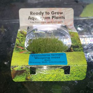 Weeping moss aquarium plant for Sale in San Diego, CA