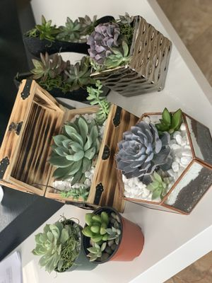Succulents Custom Set (plants/cactus/cacti) for Sale in Miami Gardens, FL