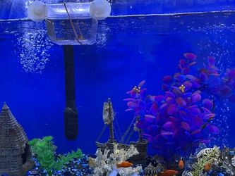 100 Gallon Acquarium With Fish, Water Pump, Air Pump, Fish Food and Other Accessories For Sale for Sale in Phoenix,  AZ