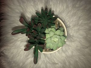 beautiful fake succulent plant decor for Sale in Orlando, FL
