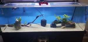 Fish tank 100gl for Sale in Long Beach, CA