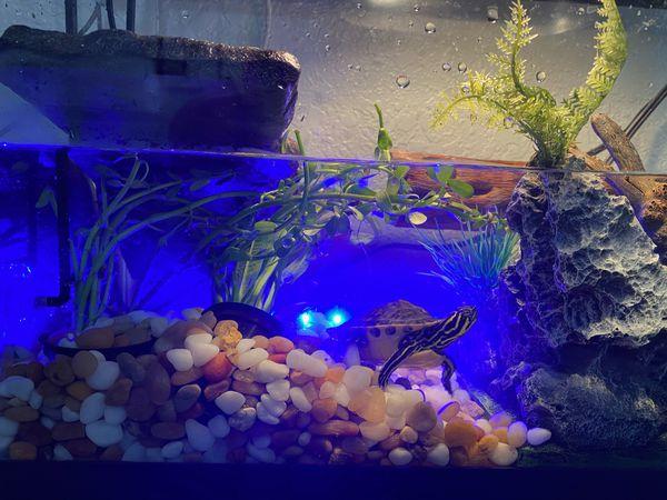 10 gallon Aquarium w/ Screen, Filter, Blue Light Bar & Oxygenator & Replacement Carbon/Pad