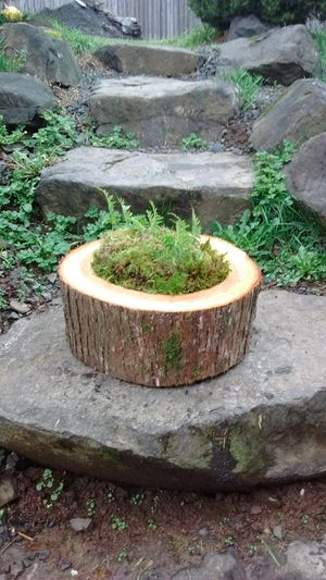Live Aromatic Cedar Log Natural Rustic Decor for Sale in Portland, OR