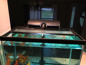 Selling fish's with tank for Sale in Greensboro, NC