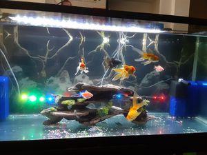75 gallon fish tank for Sale in Houston, TX
