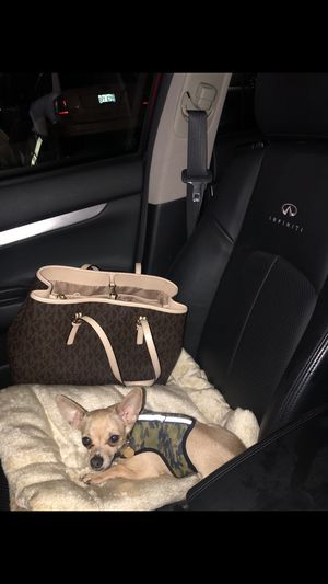 Toy Chihuahua for Sale in Grand Rapids, MI