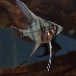 Fish Tank. for Sale in Farmingdale, NY