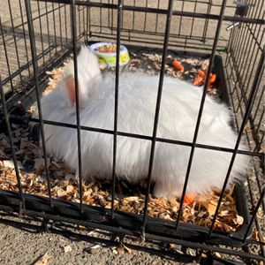 Bunny Cage for Sale in San Pablo, CA