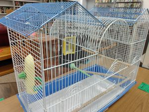 Bird cage for Sale in St. Louis, MO