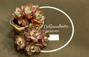 Echeveria herra cluster rare succulent korea succulent for Sale in Westminster, CA