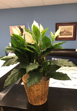 Medium size fake plant with white leaves as well. Very pretty. for Sale in Duluth, GA