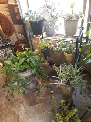 Plants plants plants for Sale in Chandler, AZ