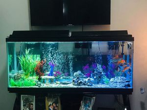 glass fish tank for Sale in Tampa, FL