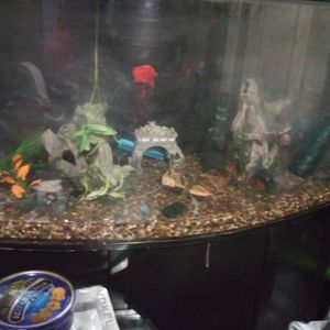 250 Gal. Aquarium Pristine Condition for Sale in Colma, CA