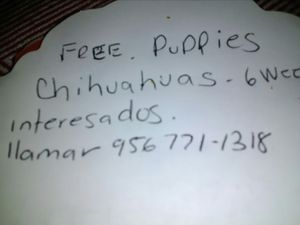 Free. Puppies. for Sale in Laredo, TX