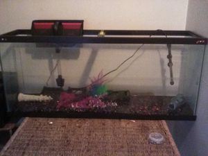 55 gallon fish tank and accessories for Sale in Columbus, OH